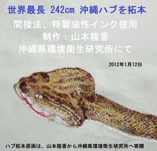 ハブ拓本1.jpg